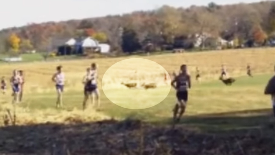 Deer Makes Fun Of Cross Country Runner