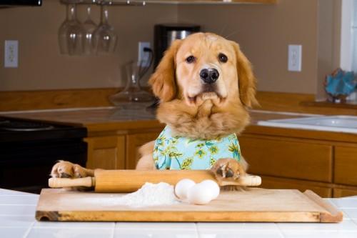 Dogs Do MannequinChallenge